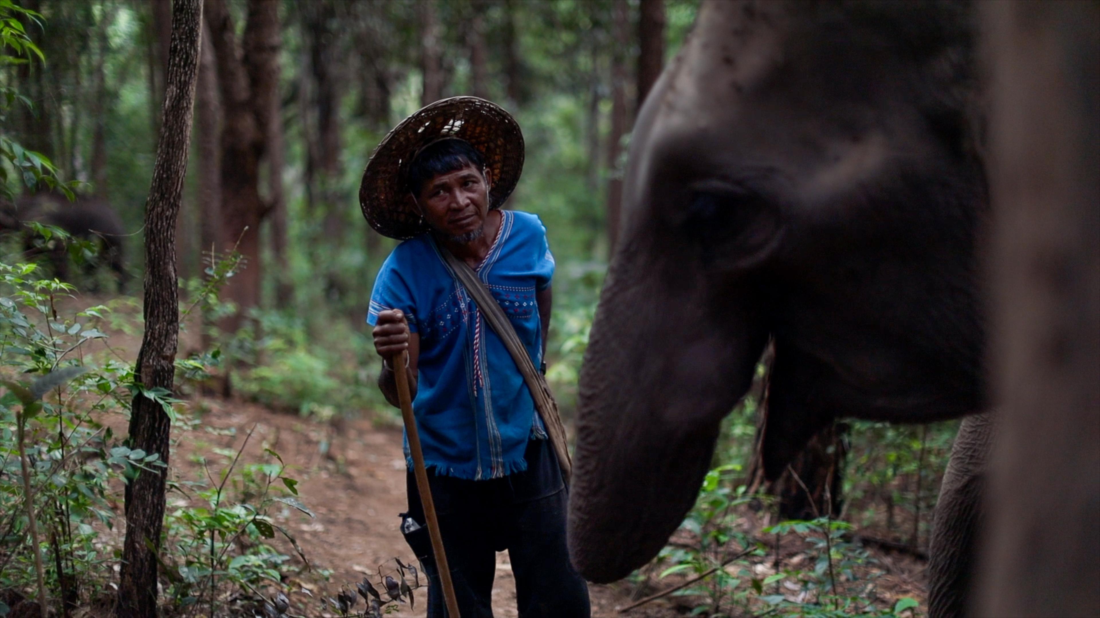 chiang-mai-elephants